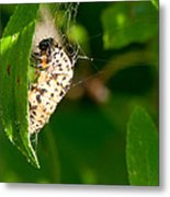 Butterfly Larvae Metal Print by Andrew Gaylor