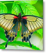 Butterfly Study #0064 Metal Print by Floyd Menezes