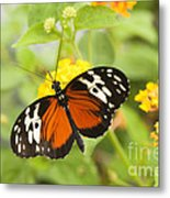 Butterfly Wings Metal Print by Anne Gilbert