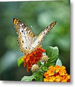 Butterfly Wings Of Sun 2 Metal Print by Thomas Woolworth