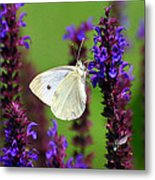 Cabbage White Butterfly Metal Print by Christina Rollo