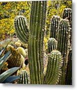 Cacti Habitat Metal Print by Kelley King