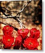 Cactus Flowers 2 Metal Print by Julie Lueders