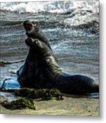 California - Elephant Seals Of Big Sur 006 Metal Print by Lance Vaughn