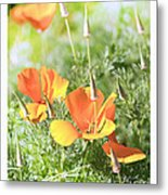 California Poppies Metal Print by Artist and Photographer Laura Wrede