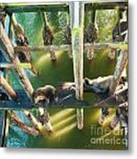 California Sealions Under The Santa Cruz Pier Metal Print by Artist and Photographer Laura Wrede