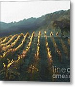 California Vineyard Series Wine Country Metal Print by Artist and Photographer Laura Wrede