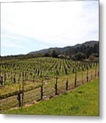 California Vineyards In Late Winter Just Before The Bloom 5d22114 Metal Print by Wingsdomain Art and Photography