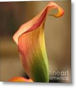 Calla Lily 3 Metal Print by Cathy Lindsey