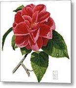 Camellia Metal Print by Richard Harpum