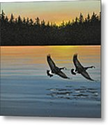 Canada Geese Metal Print by Kenneth M  Kirsch
