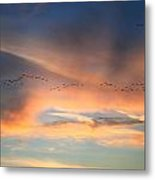 Canada Goose Flock Sunset Metal Print by John Burk