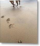Canine Beach Jogging Metal Print by Eldad Carin