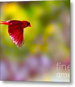 Cardinal In Flight Metal Print by Dan Friend