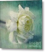Carnation Metal Print by Priska Wettstein