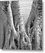 Carved Roots Metal Print by Chris Ann Wiggins