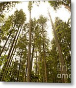 Cathedral Forest Metal Print by Artist and Photographer Laura Wrede