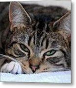 Cats 61 Metal Print by Joyce StJames