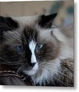 Cats 64 Metal Print by Joyce StJames