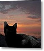 Cats 65 Metal Print by Joyce StJames