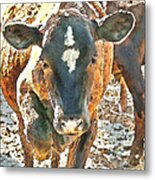 Cattle Round Up Metal Print by Artist and Photographer Laura Wrede