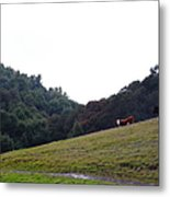 Cattles At Fernandez Ranch California - 5d21106 Metal Print by Wingsdomain Art and Photography