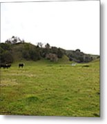 Cattles At Fernandez Ranch California - 5d21124 Metal Print by Wingsdomain Art and Photography