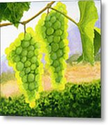 Chardonnay Grapes Metal Print by Mike Robles