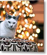 Charly And The Xmas Tree Metal Print by Edward Kreis