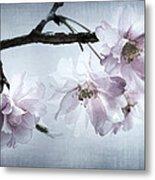 Cherry Blossom Sweetness Metal Print by Kathy Clark