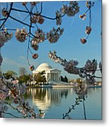 Cherry Blossoms 2013 - 039 Metal Print by Metro DC Photography
