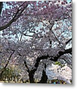 Cherry Blossoms 2013 - 044 Metal Print by Metro DC Photography