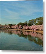 Cherry Blossoms 2013 - 087 Metal Print by Metro DC Photography