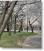 Cherry Blossoms - Washington Dc - 011360 Metal Print by DC Photographer