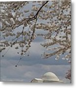 Cherry Blossoms With Jefferson Memorial - Washington Dc - 011313 Metal Print by DC Photographer