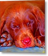 Chocolate Labrador Puppy Metal Print by Iain McDonald
