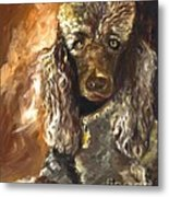 Chocolate Poodle Metal Print by Susan A Becker