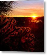 Cholla On Fire Metal Print by Kelly Gibson