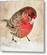 Christmas Card 9 Metal Print by Betty LaRue