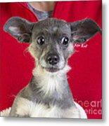 Christmas Dog Metal Print by Edward Fielding