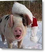 Christmas Pig Metal Print by Samantha Howell