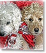 Christmas Puppy Metal Print by Bob Hislop