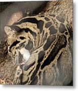 Clouded Leopard - National Zoo - 01134 Metal Print by DC Photographer
