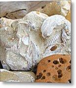 Coastal Shell Fossil Art Prints Rocks Beach Metal Print by Baslee Troutman