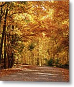 Colorful Canopy Metal Print by Sandy Keeton