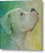 Colours Metal Print by Judy Wood
