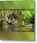 Come On...the Waters Fine. Metal Print by Diane Hagler