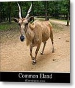 Common Eland Metal Print by Chris Flees