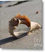 Conch On The Beach Metal Print by John Doble