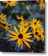 Cone Flowers Metal Print by Marcio Faustino